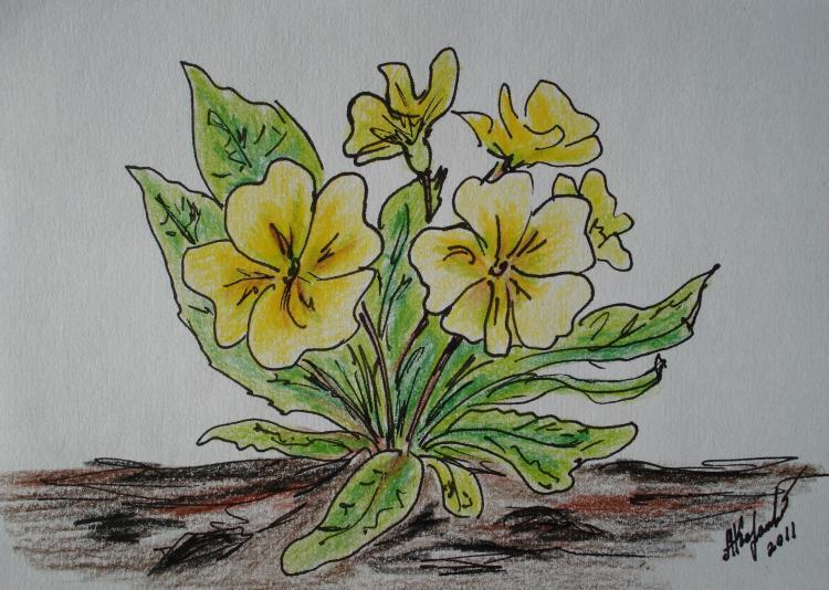 Как нарисовать первоцветы 10