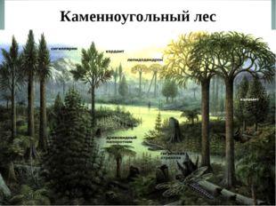 Каменноугольный лес