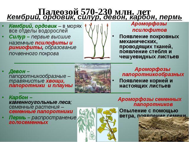 Палеозой 570-230 млн. лет Ароморфозы псилофитов Появление покровных механичес...