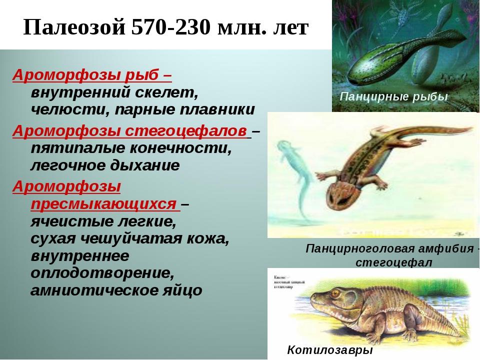 Палеозой 570-230 млн. лет Ароморфозы рыб – внутренний скелет, челюсти, парные...