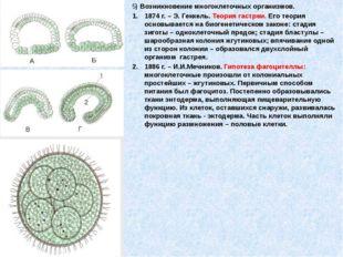 5) Возникновение многоклеточных организмов. 1874 г. – Э. Геккель. Теория гас