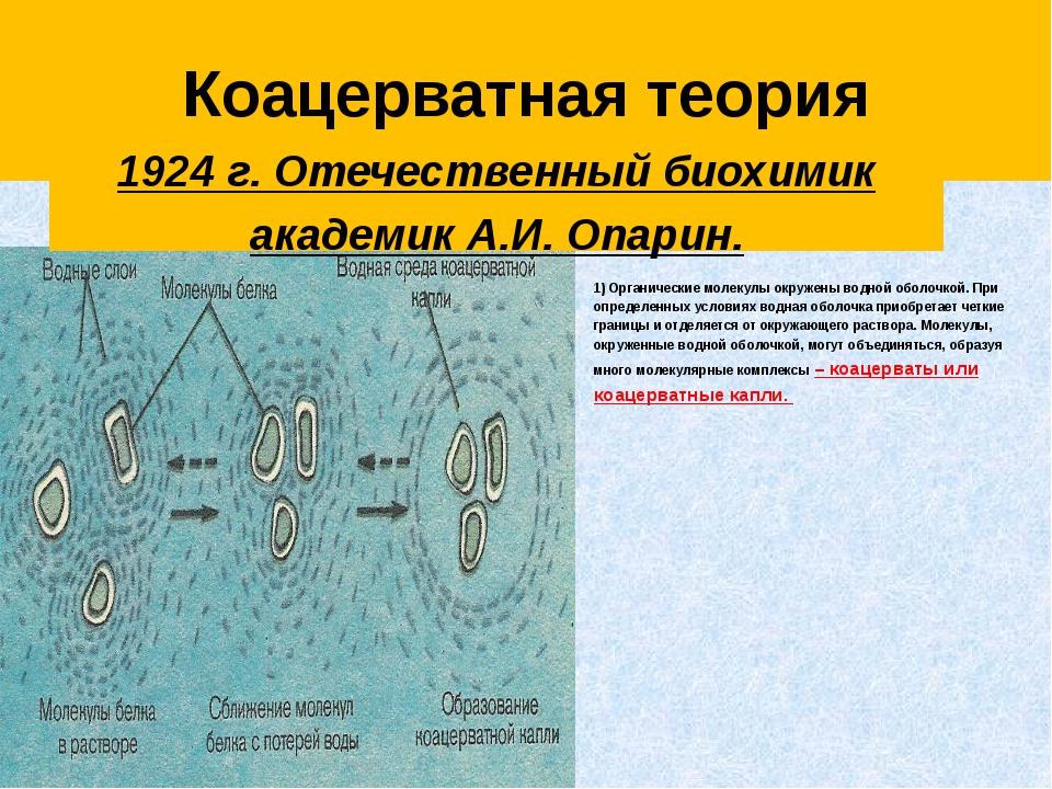 Коацерватная теория 1) Органические молекулы окружены водной оболочкой. При...