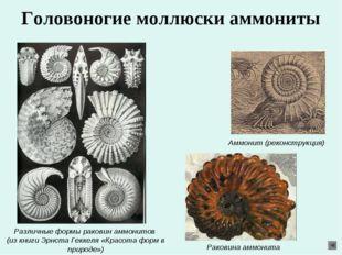 Головоногие моллюски аммониты Различные формы раковин аммонитов (из книги Эрн