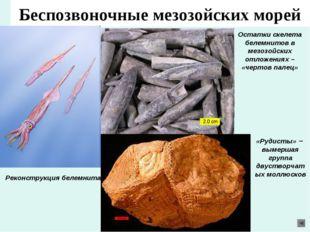 Беспозвоночные мезозойских морей Реконструкция белемнита Остатки скелета беле