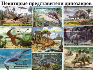 Некоторые представители динозавров Диплодок (Diplodocus) Бронтозавр (Brontosa