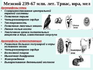 Мезозой 239-67 млн. лет. Триас, юра, мел Ароморфозы птиц Совершенствование це