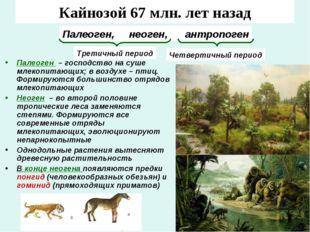 Кайнозой 67 млн. лет назад Палеоген – господство на суше млекопитающих; в воз