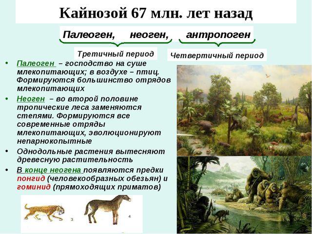 Кайнозой 67 млн. лет назад Палеоген – господство на суше млекопитающих; в воз...