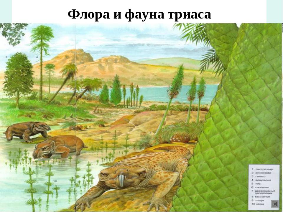 Флора и фауна триаса