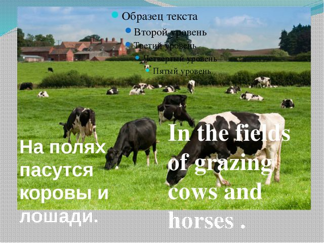 In the fields of grazing cows and horses . На полях пасутся коровы и лошади.