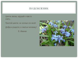 подснежник Цветок весны, идущий к нам по снегу,- Простой цветок, но сколько о