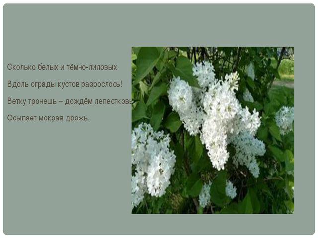 Сколько белых и тёмно-лиловых Вдоль ограды кустов разрослось! Ветку тронешь –...