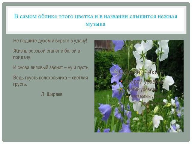 В самом облике этого цветка и в названии слышится нежная музыка Не падайте ду...