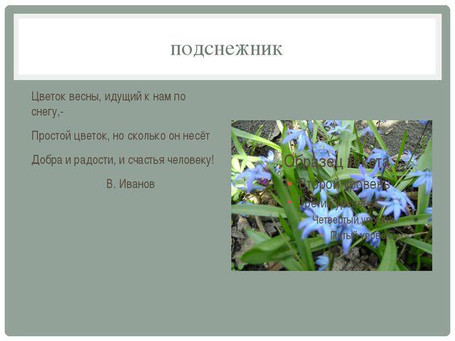 подснежник Цветок весны, идущий к нам по снегу,- Простой цветок, но сколько о...