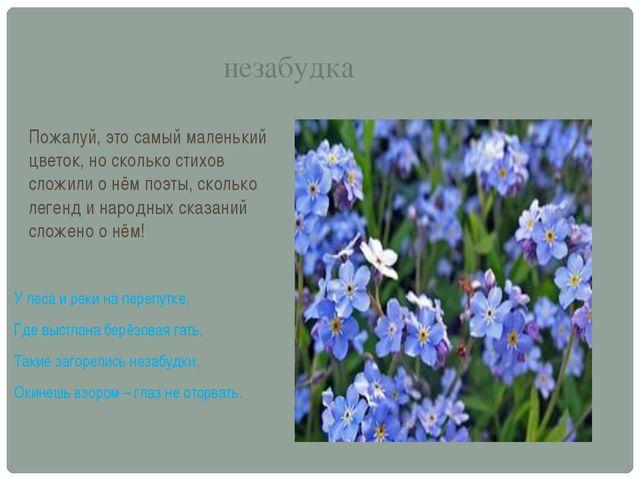 незабудка Пожалуй, это самый маленький цветок, но сколько стихов сложили о нё...