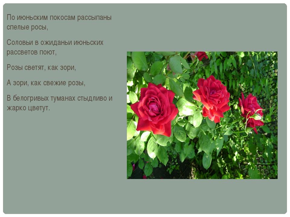 По июньским покосам рассыпаны спелые росы, Соловьи в ожиданьи июньских рассве...