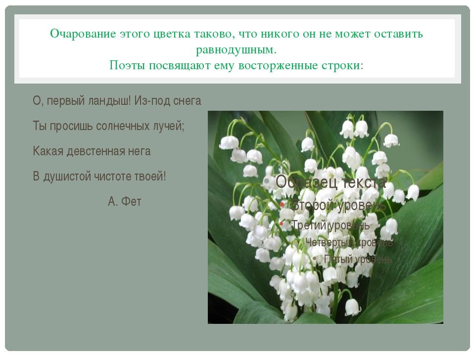Очарование этого цветка таково, что никого он не может оставить равнодушным....