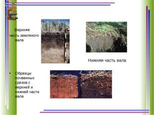 Нижняя часть вала Верхняя часть земляного вала Образцы почвенных срезов с ве
