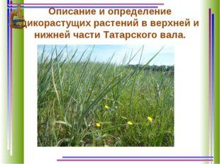 Описание и определение дикорастущих растений в верхней и нижней части Татарск