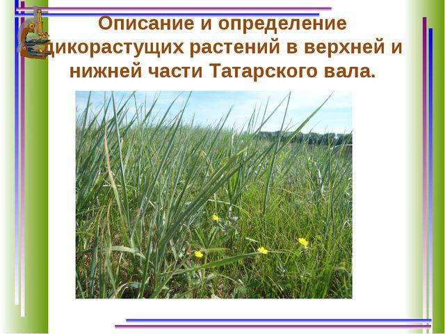 Описание и определение дикорастущих растений в верхней и нижней части Татарск...