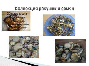 Коллекция ракушек и семян