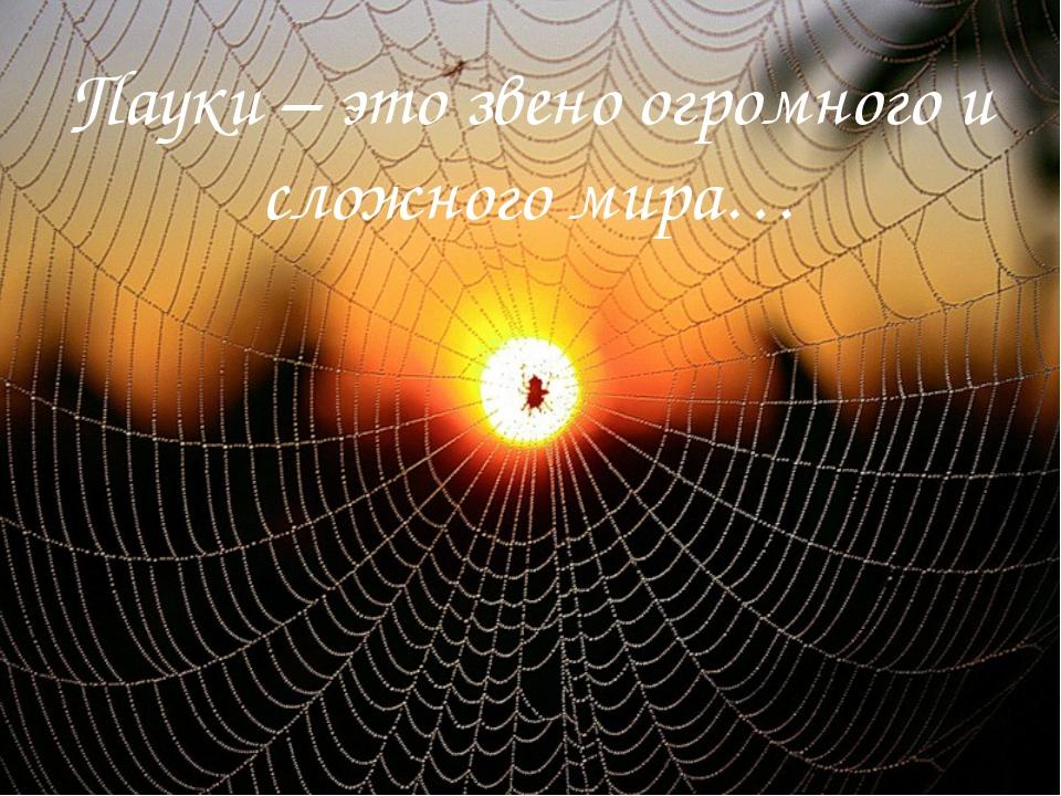 Пауки – это звено огромного и сложного мира…