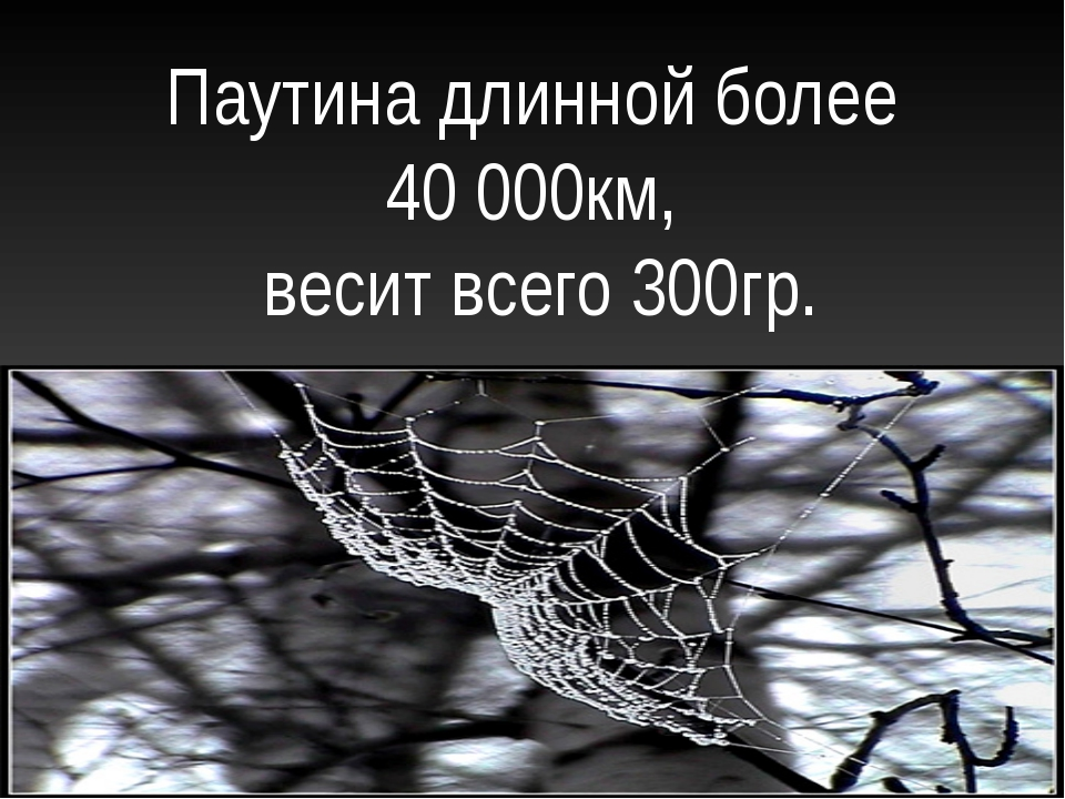 Паутина длинной более 40 000км, весит всего 300гр.