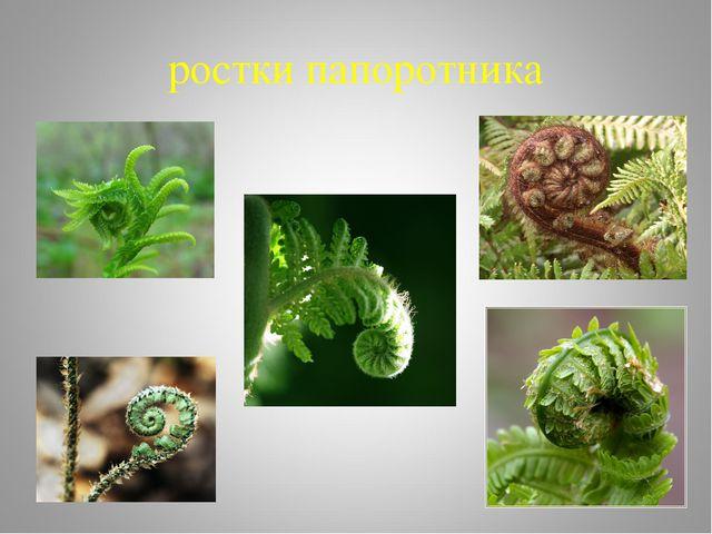 ростки папоротника