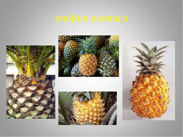 ячейки ананаса