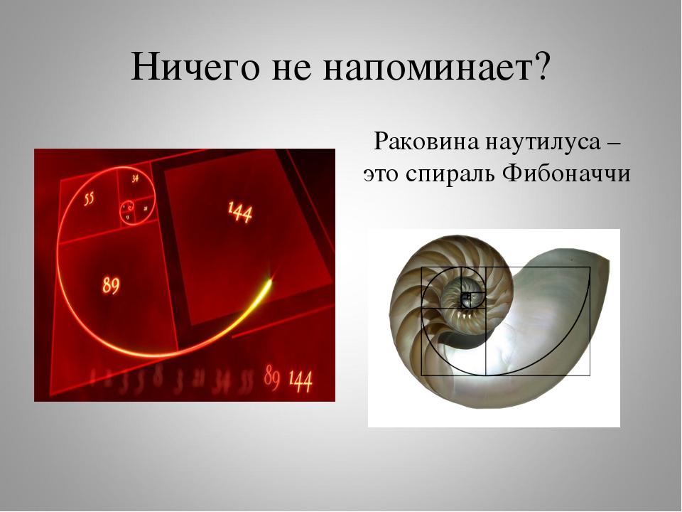 Ничего не напоминает? Раковина наутилуса – это спираль Фибоначчи