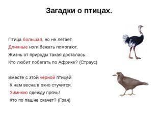 Загадки о птицах.  Птица большая, но не летает, Длинные ноги бежать помогают