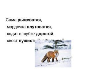 Сама рыжеватая, мордочка плутоватая, ходит в шубке дорогой, хвост пушистый и