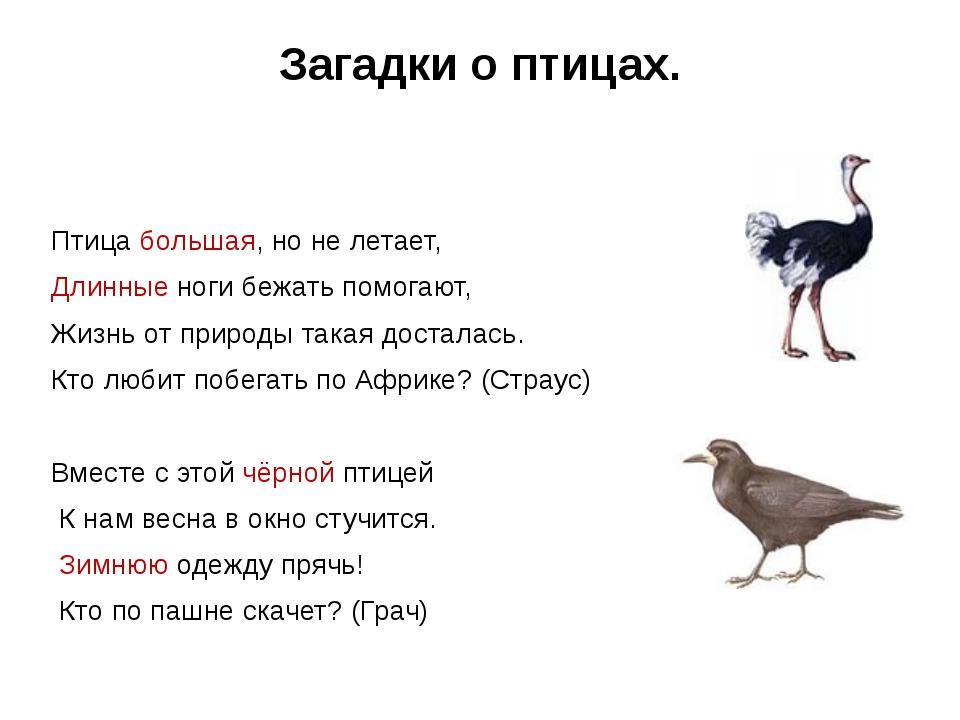 Загадки о птицах.  Птица большая, но не летает, Длинные ноги бежать помогают...