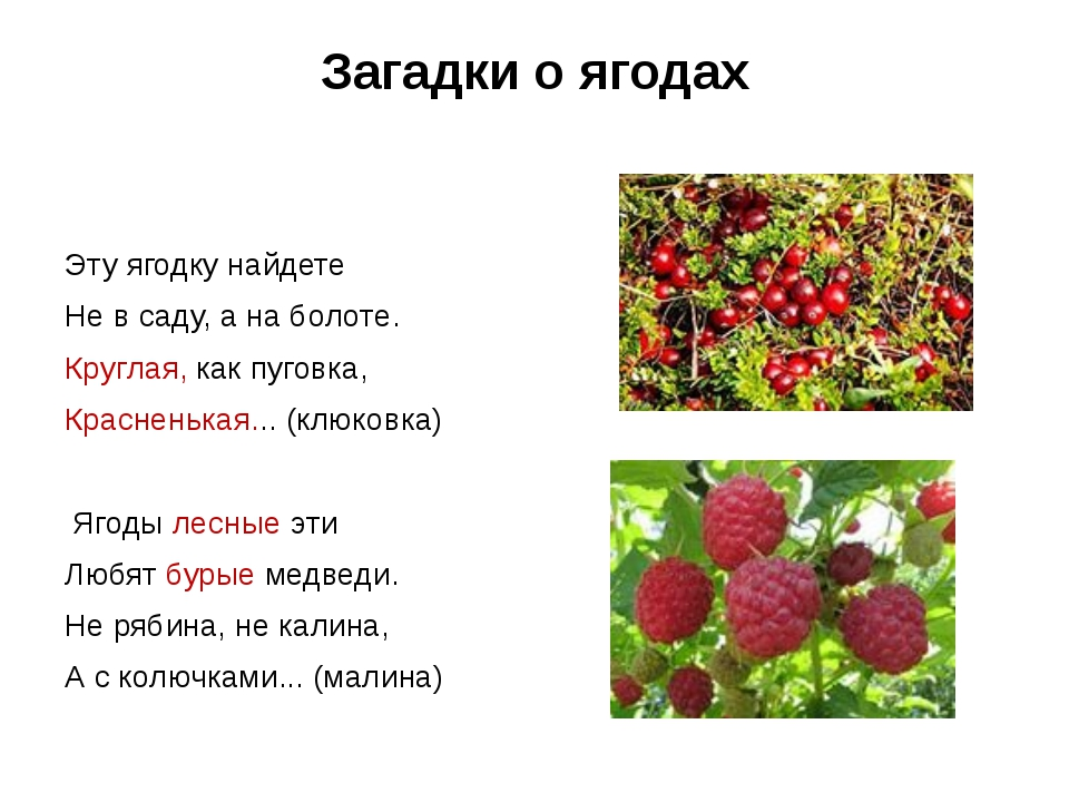 Загадки о ягодах  Эту ягодку найдете Не в саду, а на болоте. Круглая, как пу...