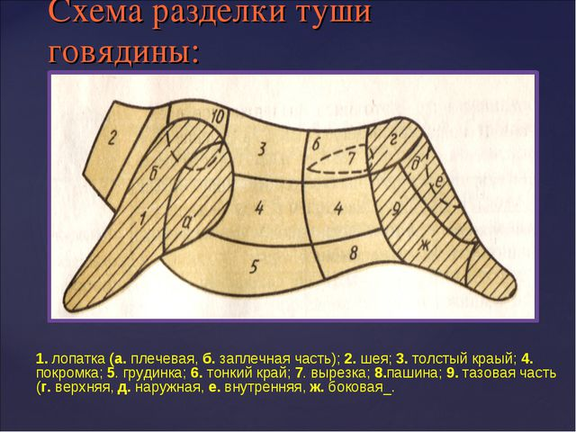Схема разделки туши говядины: 1. лопатка (а. плечевая, б. заплечная часть); 2...