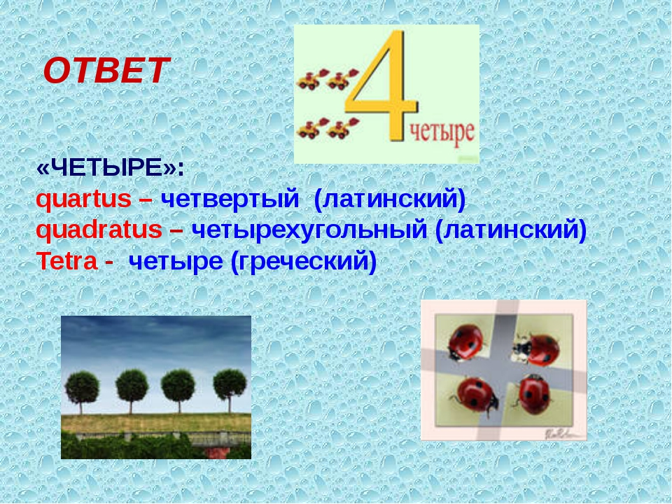 ОТВЕТ «ЧЕТЫРЕ»: quartus – четвертый (латинский) quadratus – четырехугольный (...