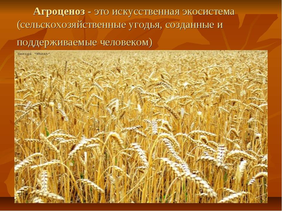 Агроценоз - это искусственная экосистема (сельскохозяйственные угодья, созда...