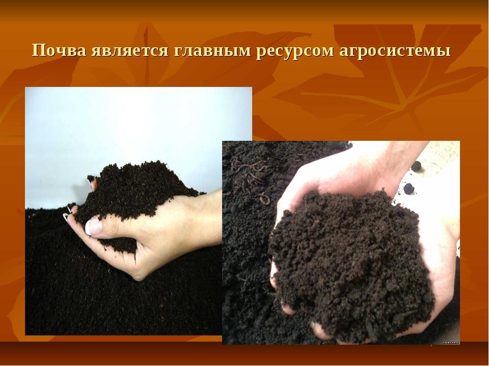 Почва является главным ресурсом агросистемы