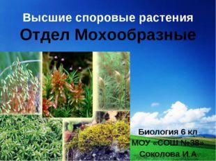 Высшие споровые растения Отдел Мохообразные Биология 6 кл МОУ «СОШ №38» Сокол