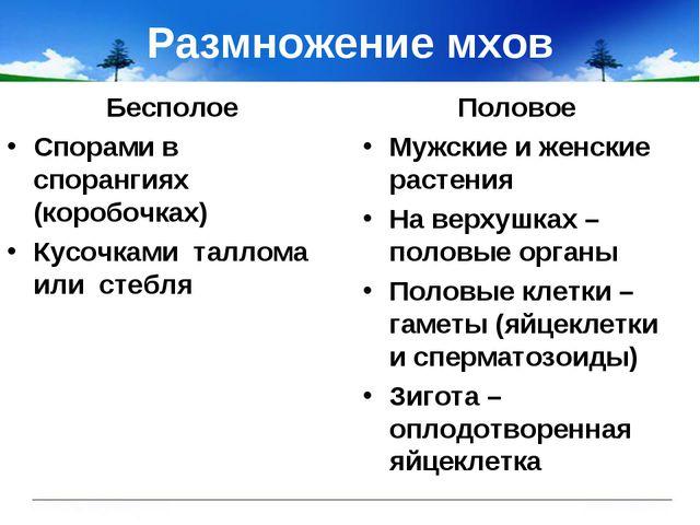 Размножение мхов Бесполое Спорами в спорангиях (коробочках) Кусочками таллома...
