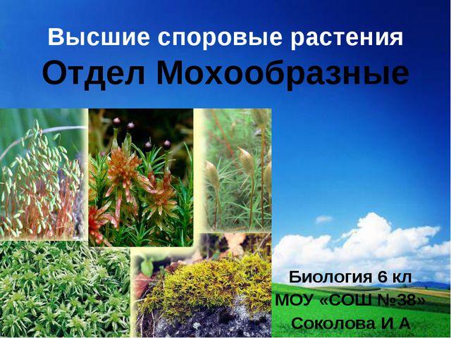 Высшие споровые растения Отдел Мохообразные Биология 6 кл МОУ «СОШ №38» Сокол...