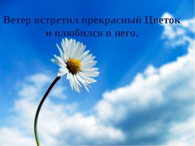 Ветер встретил прекрасный Цветок и влюбился в него.
