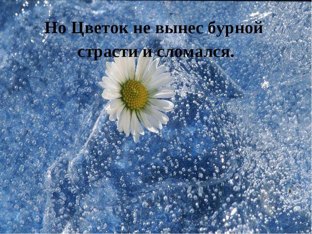 Но Цветок не вынес бурной страсти и сломался.