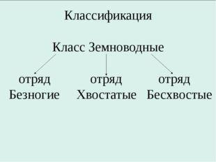 Классификация Класс Земноводные отряд отряд отряд Безногие Хвостатые Бесхвос