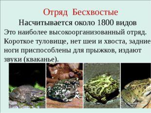 Отряд Бесхвостые Насчитывается около 1800 видов Это наиболее высокоорганизов