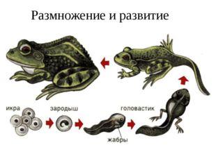 Размножение и развитие