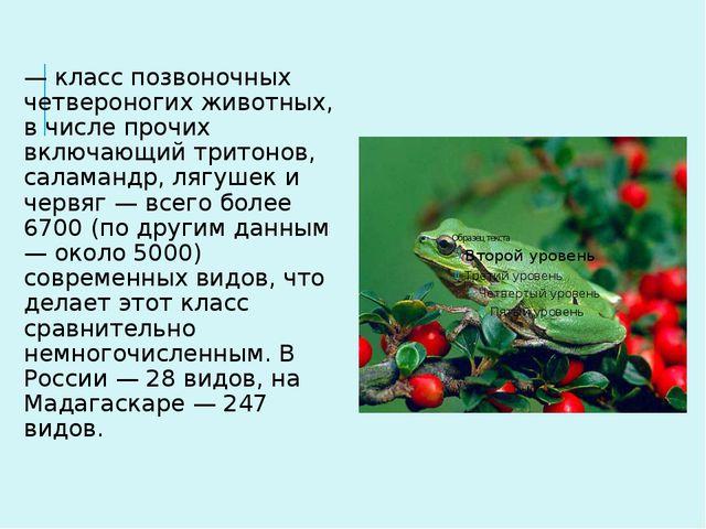 Земново́дные, или амфи́бии (лат. Amphibia) — класс позвоночных четвероногих ж...