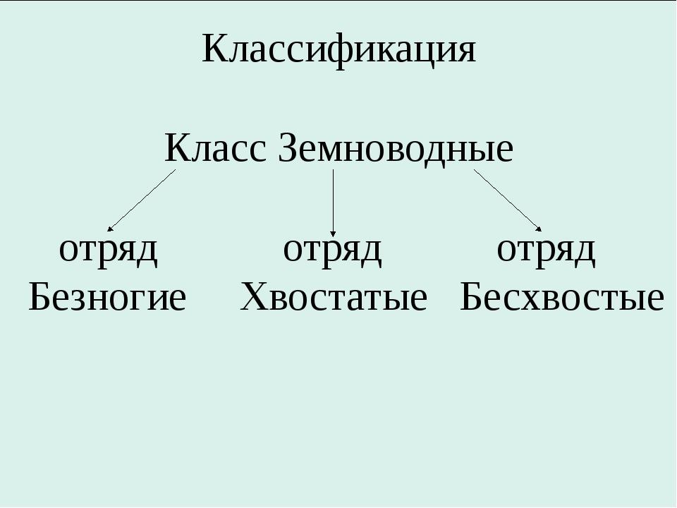 Классификация Класс Земноводные отряд отряд отряд Безногие Хвостатые Бесхвос...