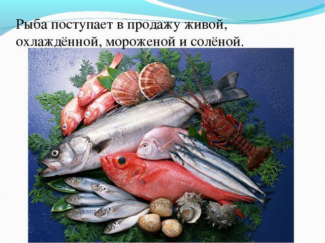 Рыба поступает в продажу живой, охлаждённой, мороженой и солёной.