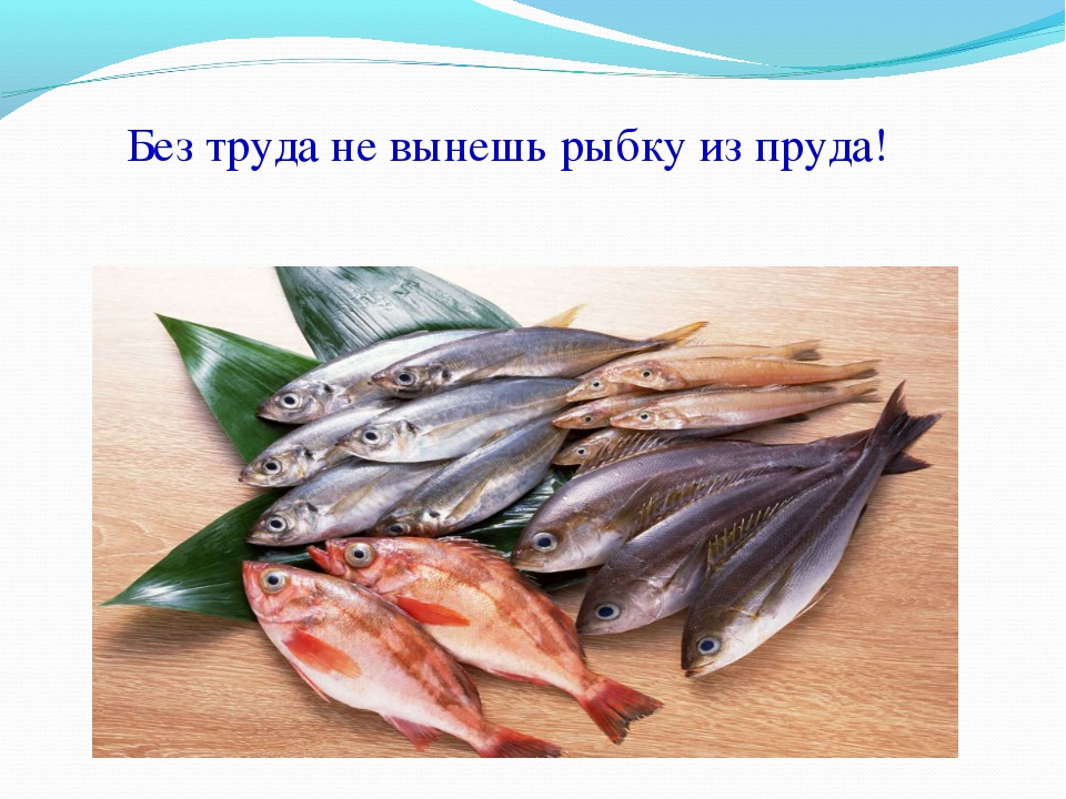 Без труда не вынешь рыбку из пруда!
